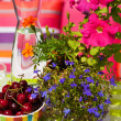 Summer in the garden — Stock Photo