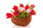 Wicked cane basket tulips — Stock Photo