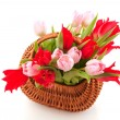 Wicked cane basket tulips — Stock Photo