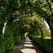 Stock Photo: Ornamental garden