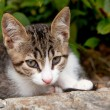 Young Greek cat — Stock fotografie