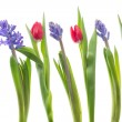 Tulips and Hyacinths — Stock Photo