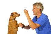 Training the dog — Stock Photo