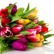 ������, ������: Colorful tulips