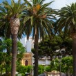 Palm trees in Spanish village - Stock Photo