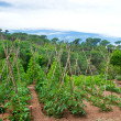 Стоковое фото: Landscape with vegetable garden