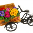 Flower bike - Stock Photo