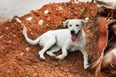 Greek stray dog — Stock Photo