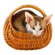 Little cat in basket — Stock Photo #5089829