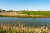 Typical Dutch landscape — Stock Photo