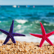 Royalty-Free Stock Photo: Standing starfishes