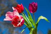 Bouquet tulips outdoor — Stock Photo