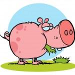 paffuto maiale rosa snacking sull'erba — Foto Stock