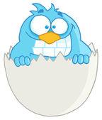 Blue Bird In An Egg Shell — Stockfoto