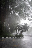 Tropical rain — Stock Photo