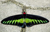 Exotic Butterfly — Stock Photo