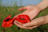 Poppy on hands — Stock Photo
