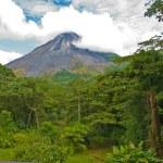 Jungle Landscape — Stock Photo #4250794