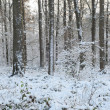 Broad-leaved forest in the snow — Foto Stock