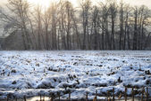 Rural landscape in the snow — Stock Photo