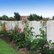 Stock Photo: Graves of unknown fallen soldiers in Word War I