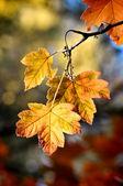 Céu de outono — Foto Stock