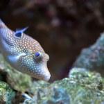 Fish — Stock Photo
