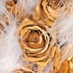Roses — Stock Photo #4593479