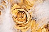 Rosales — Foto de Stock