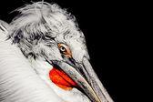 Pelikan — Stockfoto