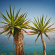Palm trees — Stock Photo #5305667