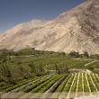 Elqui valley — Stock Photo