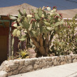 Big cactus in front of house — Zdjęcie stockowe #4903918