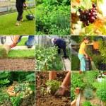 Tuinieren — Stockfoto