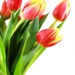 Постер, плакат: Tulips in vase