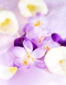 Spring motive — 图库照片