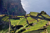 South coast of Madeira island, Rancho - Portugal — Stock Photo