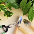Royalty-Free Stock Photo: Gardening tools and houseplants