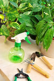 Gardening tools and houseplants — Stock Photo