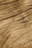 Detail of wooden cut texture - rings and saw cuts - oak - background — Stock Photo