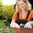 Young woman gardening - planting flowers — Stock Photo