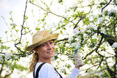 Young woman gardening - in apple tree orchard — Stock Photo