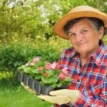 Senior woman - gardening — Stock Photo