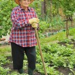 Senior woman gardening - hoeing potatoes — Stock Photo #4775355