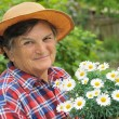 Senior woman gardening - holding Daisy — Stock Photo #4775427