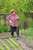 Senior woman gardening - hoeing vegetable bed — Stock Photo