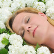 Young woman laying in flowers - snowballs — Stock Photo