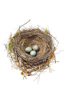 Detalle de huevos mirlo en nido aislado en blanco — Foto de Stock