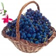 Grape - Stockfoto