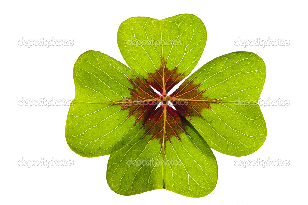 Single clover leaf isolated  Stock Photo #5168335